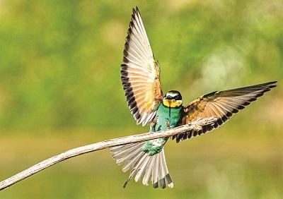uccello e natura