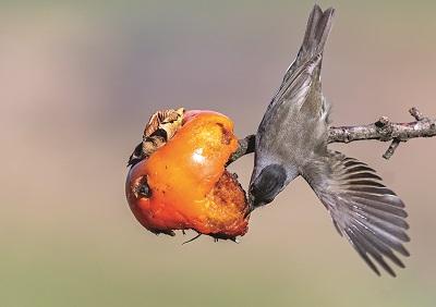 frutto e uccello